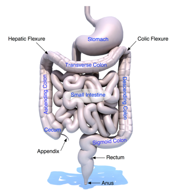 IBS DIAGRAM